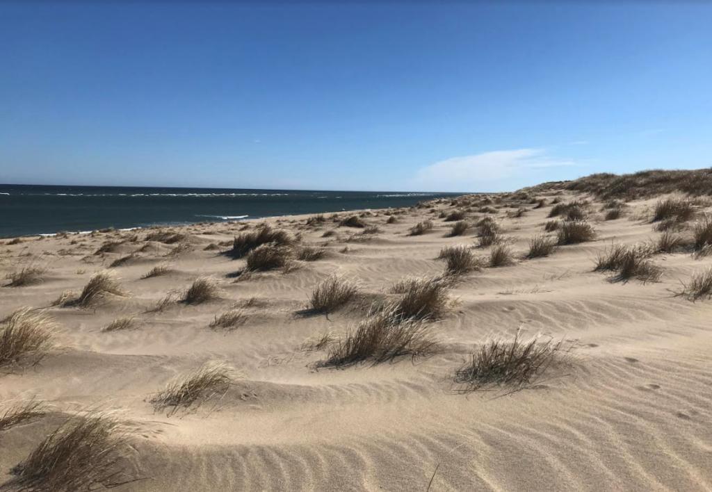 Dunes Provincetown