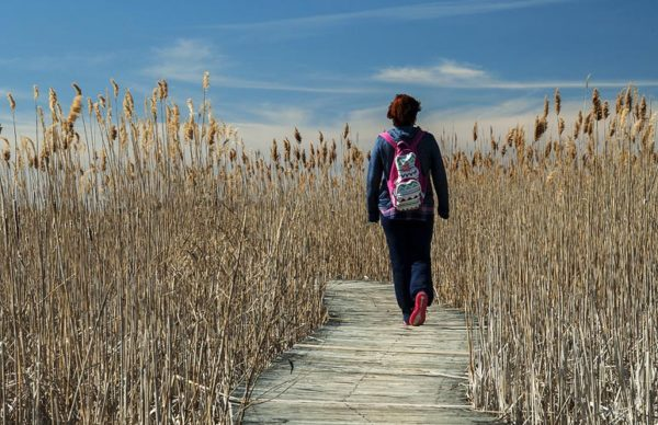 Hiking and Walking Trails in Cape Cod
